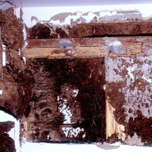 termites destroy house