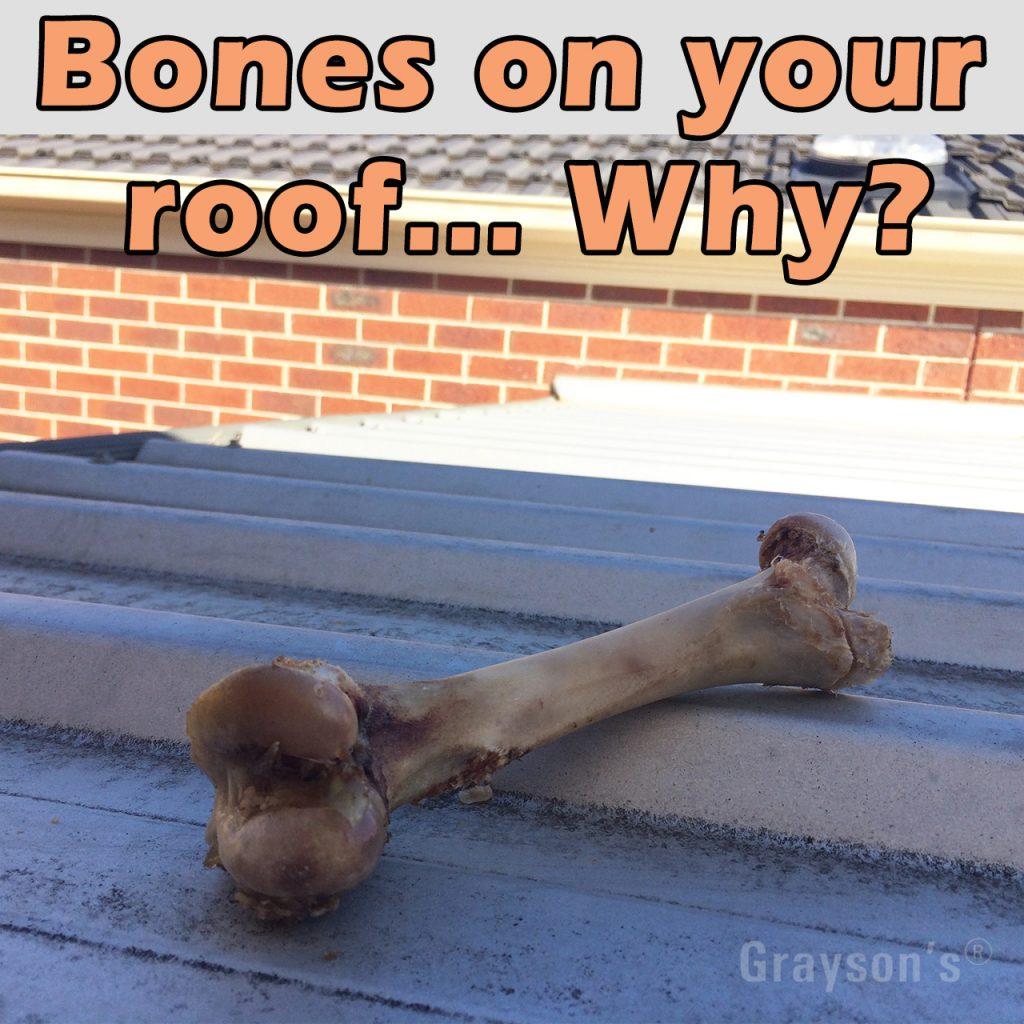 bones in gutters